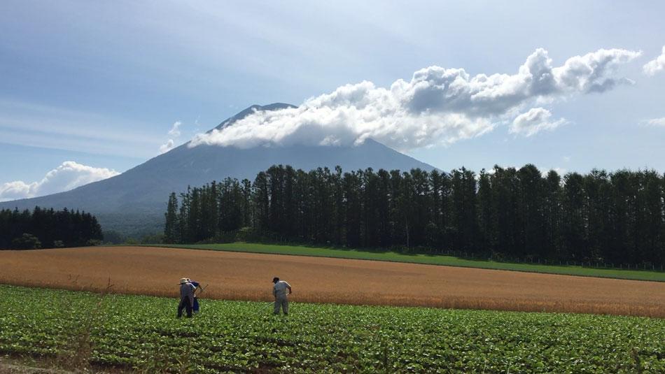 ニセコの農園風景