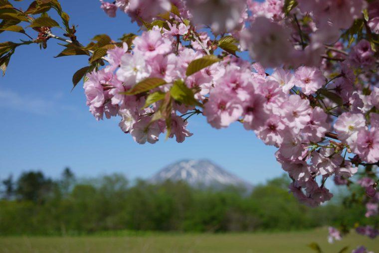 blossoms-01